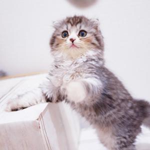 一人暮らしのペットにはやっぱり猫!その理由は?