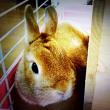 寂しさを癒やす、一人暮らしのペットにウサギがおすすめ