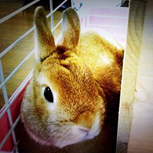 寂しさを癒やす、一人暮らしのペットにウサギを推す理由4つと気をつけること