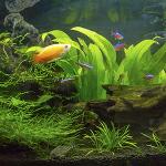 ノーベル賞受賞者も絶賛!一人暮らしのペットに熱帯魚がアツい理由
